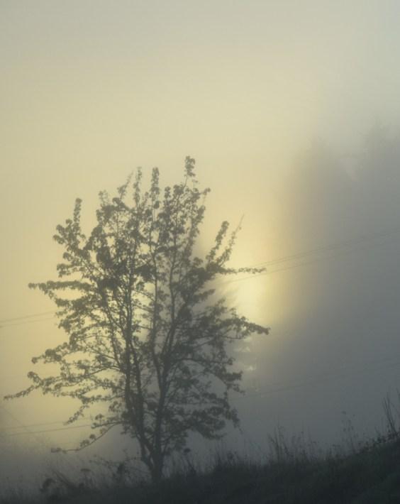 3-26-15 sun glowing through fog