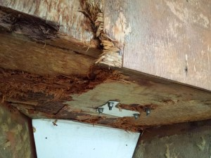 Rotted plywood covering anchor locker inside v-berth