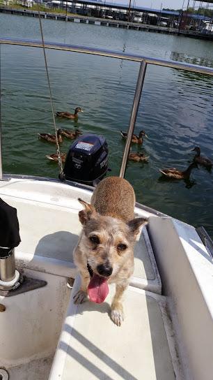 Karma posing with the ducks