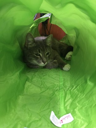 I love just chilling in my bright green tunnel that folds up in any little space.
