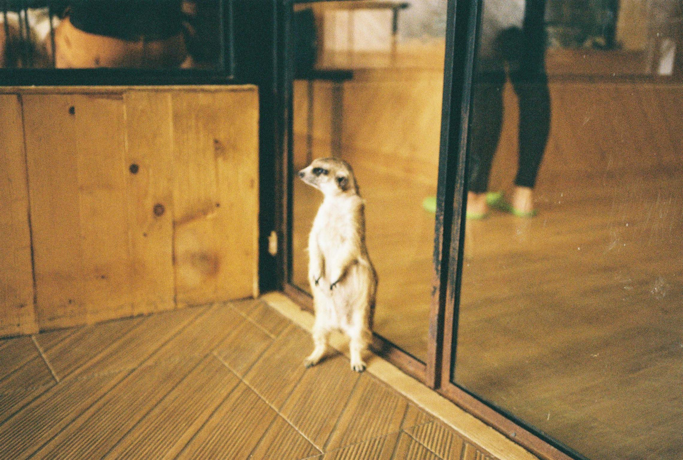 Kodak Color Plus 200, Little Zoo Cafe Bangkok