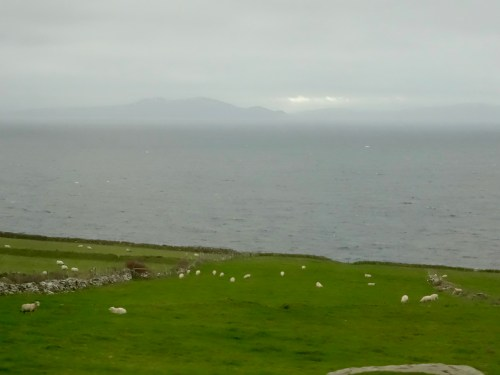 Lots of sheep, some green grass and the Skellig Michael island in the background: The coast line of County Kerry, Ireland. Photo: filmfantravel.com / Sonja Irani