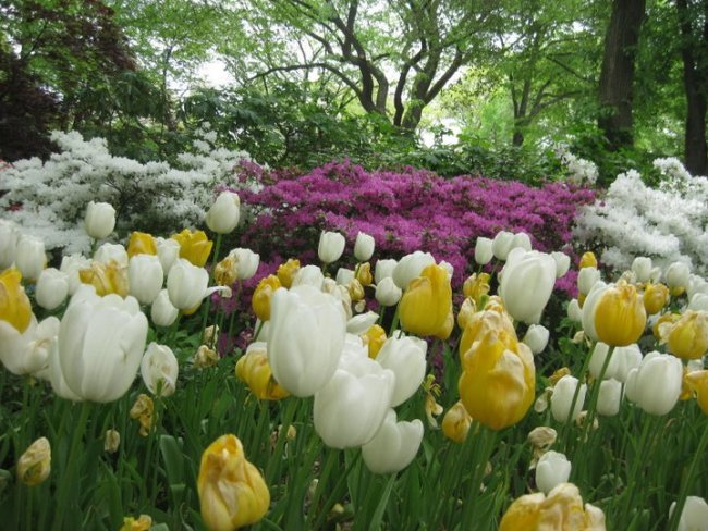 """Spring flowers in New York's Central Park – film location for """"Sex and the City"""". Photo: filmfantravel.com"""