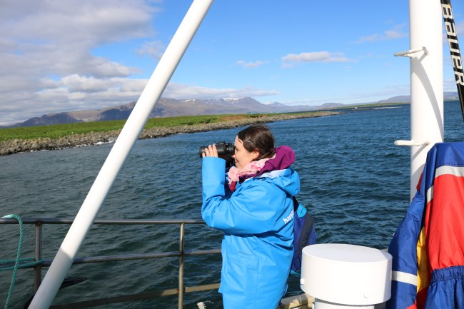 Looking for puffins on the puffin watching tour in Iceland