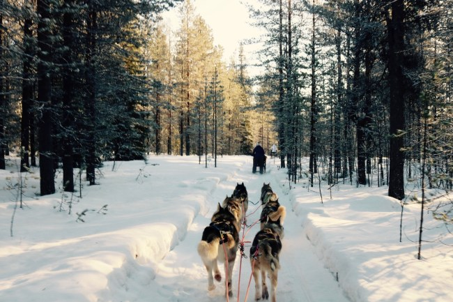 Husky Safari in Lapland