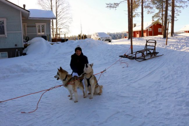 The dogs are ready to go! Photo: © Sonja Irani / FilmFanTravel.com