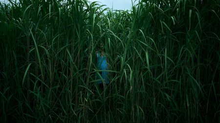 Film Recensie In The Tall Grass Filmmierenneukers