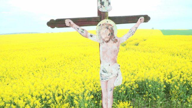 Řepka olejná a Ježíš Kristus