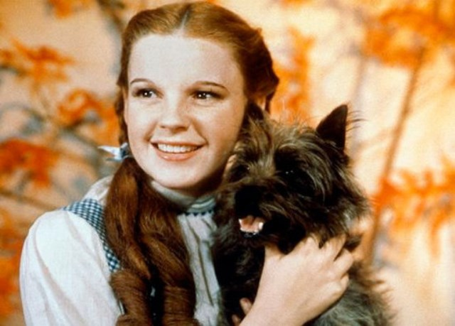 The Wizard of Oz 7