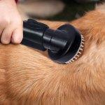 Instant-Pet-Groomer