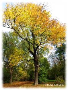 Herbst_1