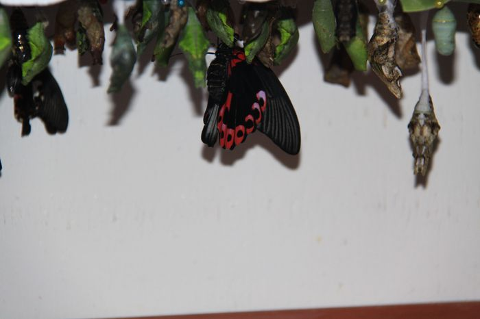 The Butterfly Farm – St. Maarten!