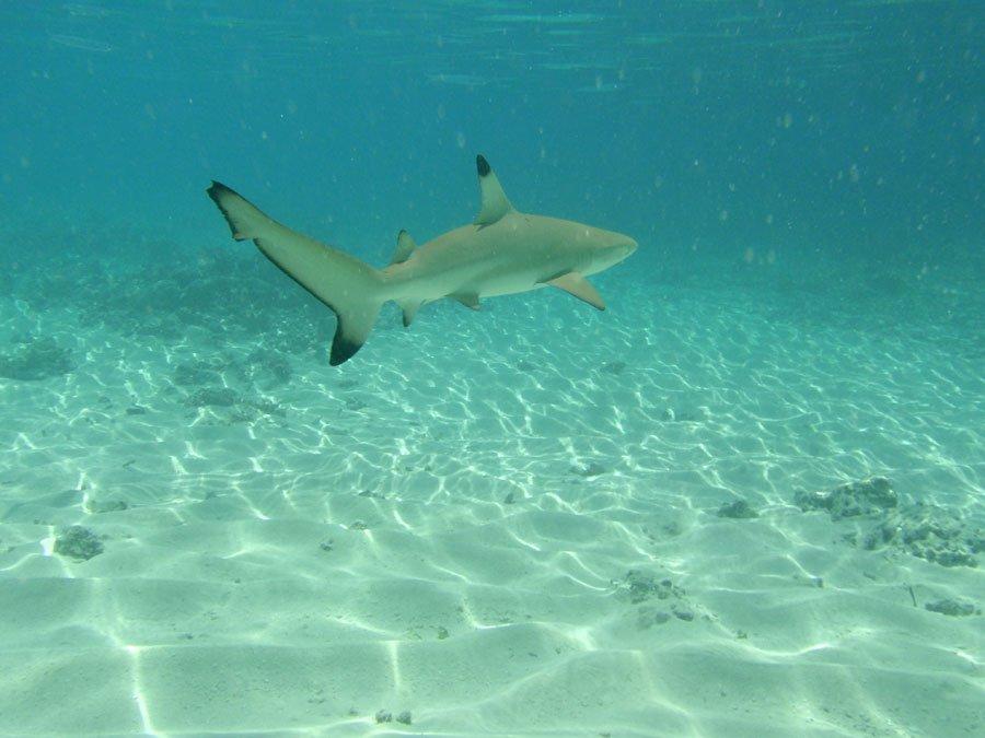 Snorkla På Maldiverna!