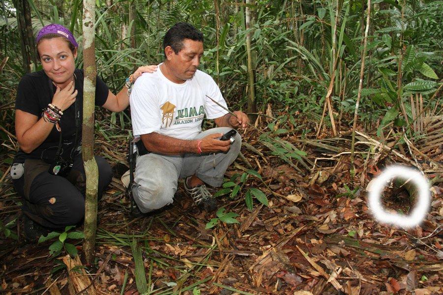 tarantella-amazonas