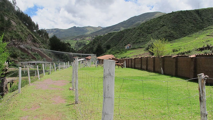 The Ccochahuasi Animal Sanctuary!