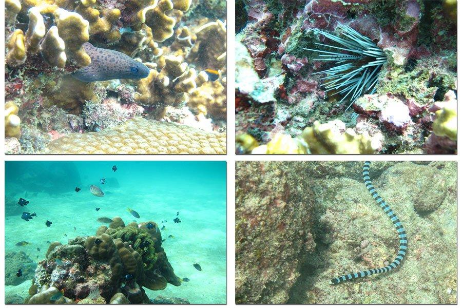 Fish from Karon Beach Thailand
