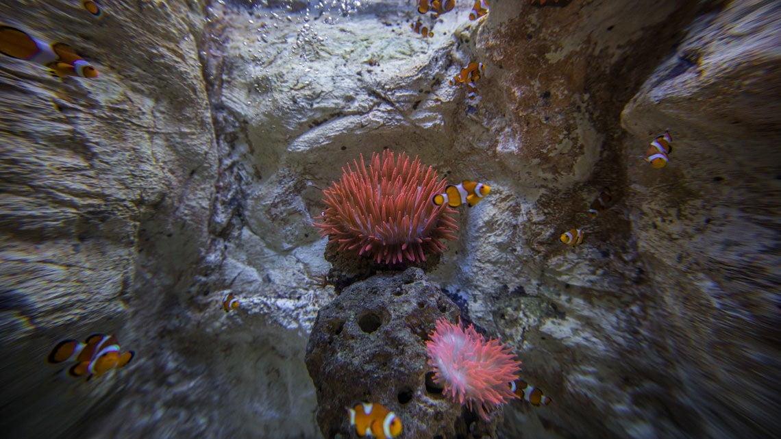 Lanzarote Aquarium