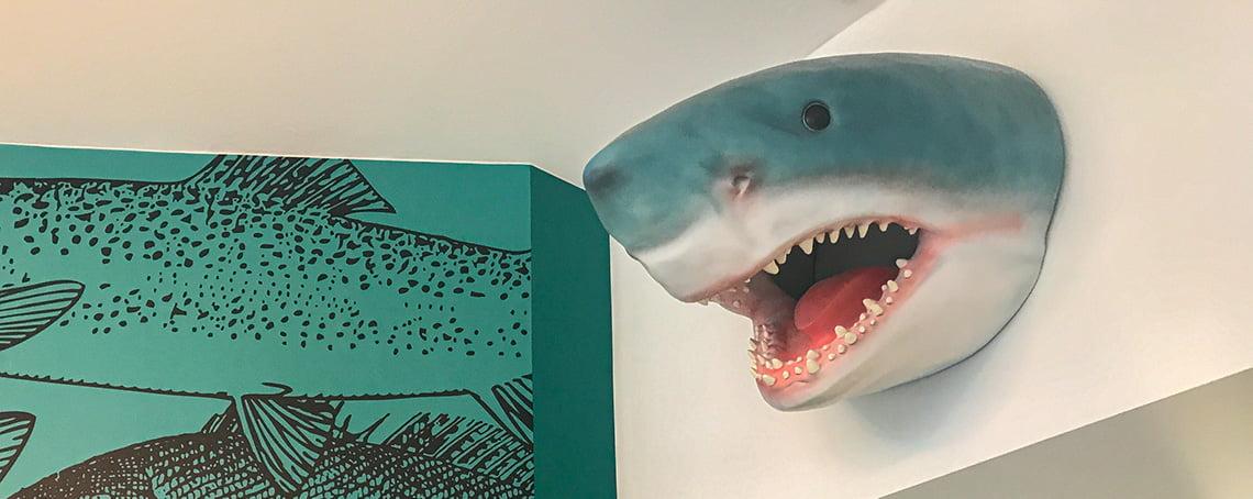 Shark on the wall