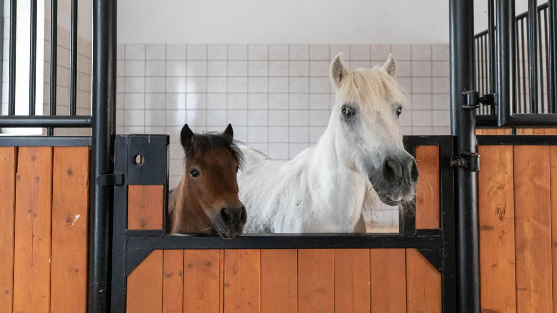 Horses at Palac Mierzecin