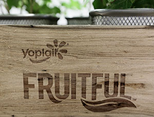 The Stratford Companies used lumber cut from trees blown down by storms in the Twin Cities to make boxes for a General Mills promotion to send out samples of Yoplait yogurt. (Staff photo: Bill Klotz)