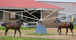 Canterbury Park plans a development that would include housing, office space, retail, restaurants and a movie theater near its existing track -- including on land near the track entrance where the existing stables are. (Staff photo: Bill Klotz)
