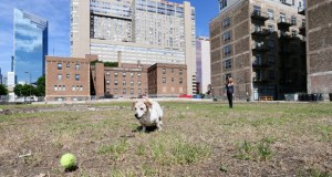 Residents of the Sexton Lofts (at right) occasionally use the vacant lot at 516 S. Eighth St. in Minneapolis as a dog park. Developer Jim Stanton plans to build condos on the site. (Staff photo: Bill Klotz)