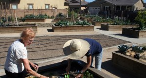 A community vegetable garden opened this year at Gavilan, a 55-plus community developed by Rancho Mission Viejo and DMB Inc. in San Juan Capistrano, California. Ellen Swallow, a homeowner, left, works with community farmer Gloria Broming. (Bloomberg Photo: John Gittelsohn)