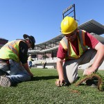 Workers install sod on the Saints field in October 2014.
