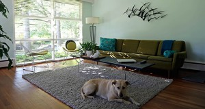 Jacqueline Jordan's dog Ana relaxes May 20 in the living room of Jordan's 1951 modernist home in Raleigh, N.C. Fans of modernist architecture estimate that North Carolina has the third-largest collection of modernist homes in the country after Los Angeles and New York's Long Island. (AP Photo: Gerry Broome)