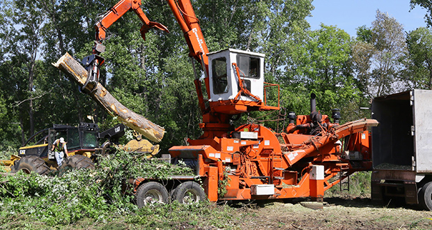 Crew started removing trees Monday from the site of Oppidan Investment Co.'s planned 105-unit senior housing project at 23075 Highway 7 in Shorewood. (Staff photo: Bill Klotz)