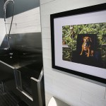 The dog spa has two wash areas and a portrait of the residence puppy named Calvin.