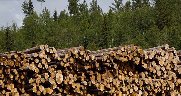 Finding alternatives to clear-cutting forests can maintain the timber stands, which will continue to absorb carbon from the atmosphere as they grow. (Bloomberg file photo)