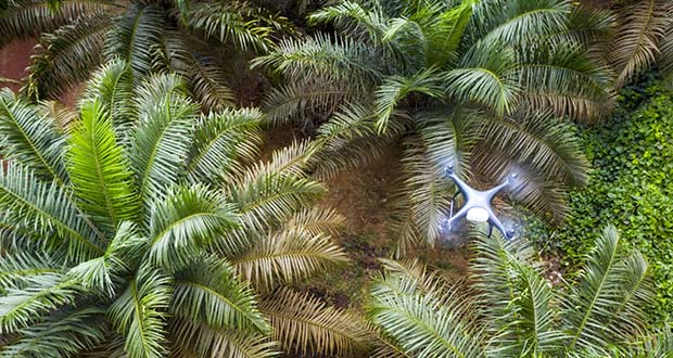 A drone flies over the Genting Tanah Merah Estate on Nov. 14. With oil-palm plantations spread across some 86,100 square miles of Malaysia and Indonesia -- an area almost the size of the U.K., the industry represents fertile ground for drone sales. (Bloomberg photo: Joshua Paul)