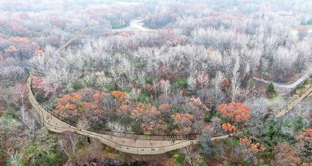 "The Minnesota Zoo is seeking design and construction services for this $22 million ""treetop trail"" amenity. (Submitted rendering: Minnesota Zoo)"