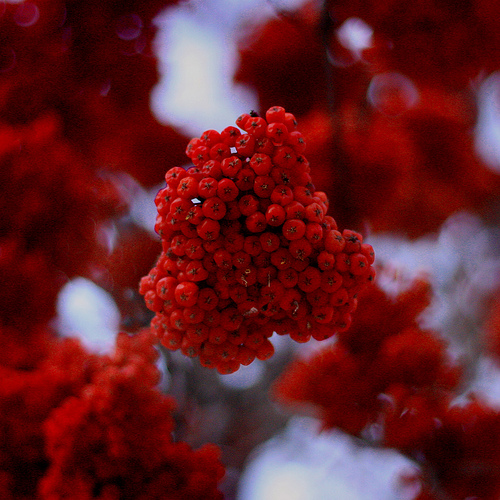 winter in edmonton by AmyJoVanB; Flickr.com