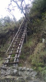 One of the ladders on the trail.