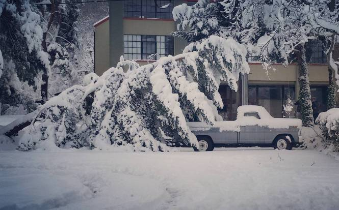 snow covered tree leaning over a truck