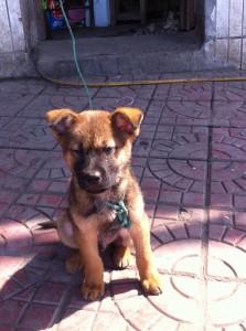 Tough Puppy
