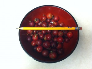 Number 2 Pencil Over Bowl Of Strawberry Guavas