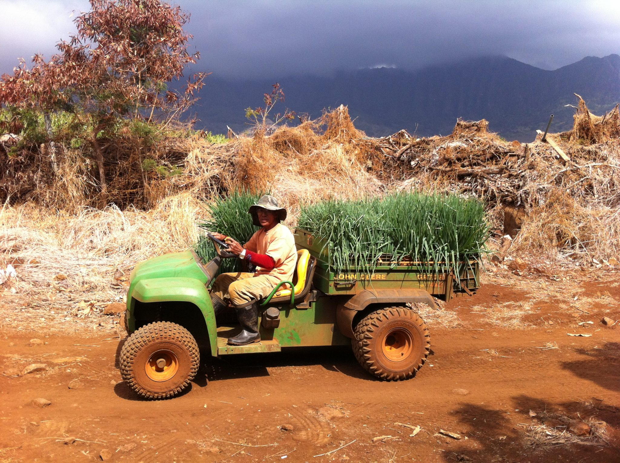 Green Onion Farmer In Hawaii, Waianae - What Should I Do Before Quitting My Job? 15 Things To Consider