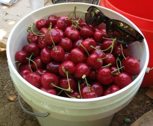 Life is like a bucket of cherries. Don't each one go to waste!