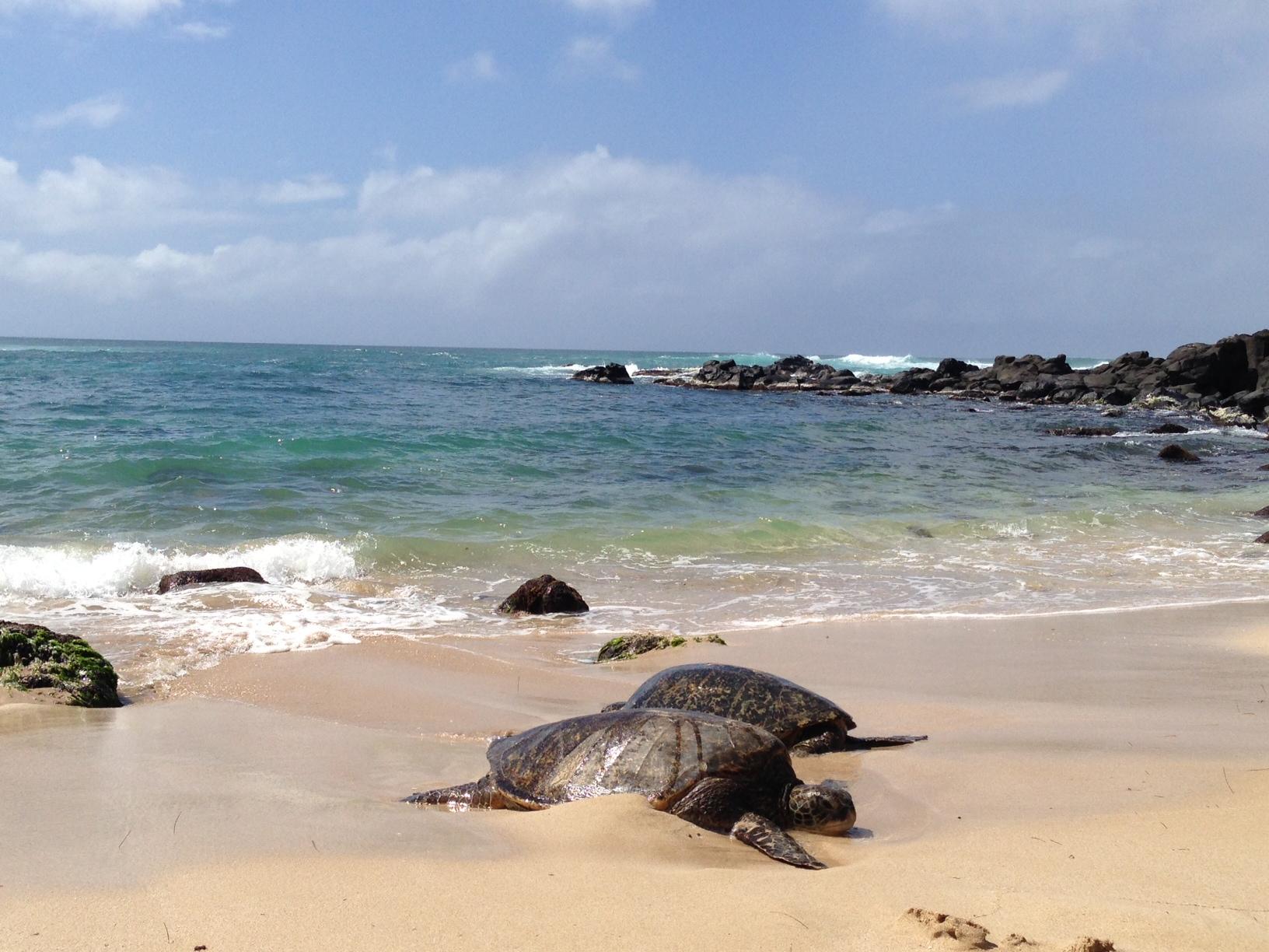 Good travel rewards credit card, Hawaii