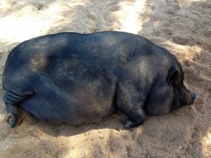 Government Shutdown Boar