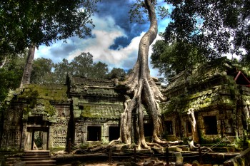 Ta prohm, Cambodia where the old trees take over the temples