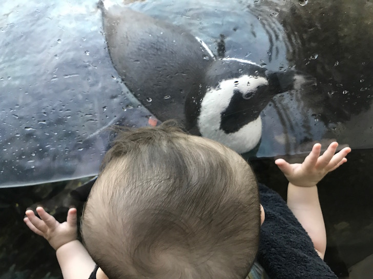 Penguins at the science museum