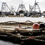 IMO, FAO spearhead initiative against marine litter in developing countries