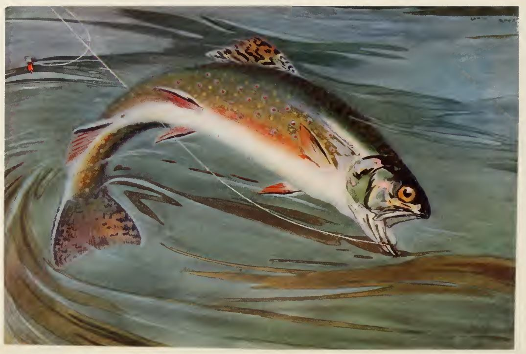 Brook Trout Louis Rhead