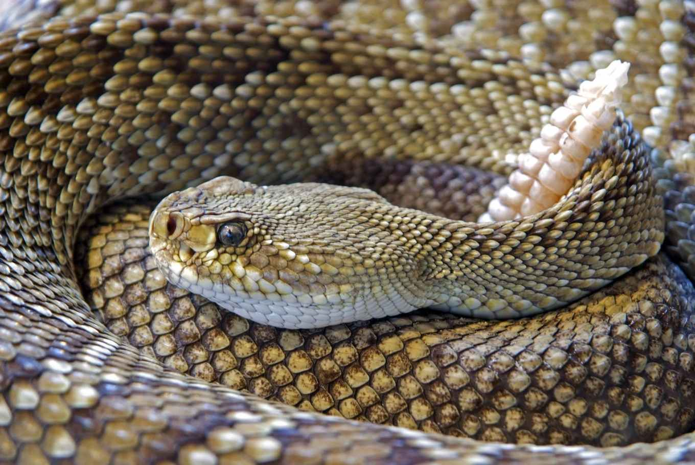 nature animal reptile snake