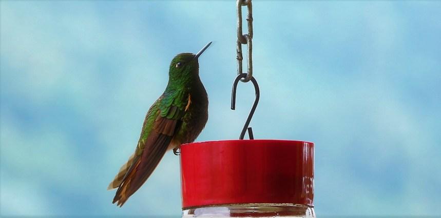 colibries-1