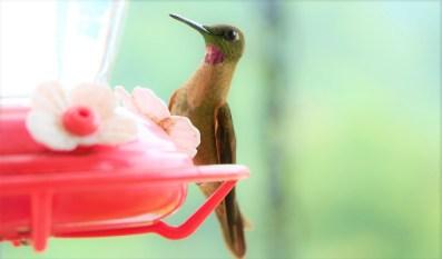 colibries-7